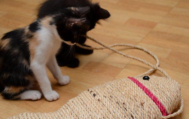 Котята и когтеточка