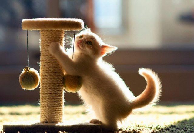 Приучаем кота к когтеточке