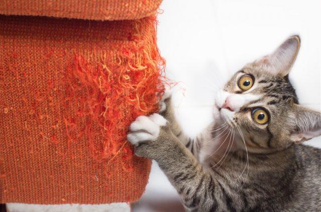 Кошка дерет мебель