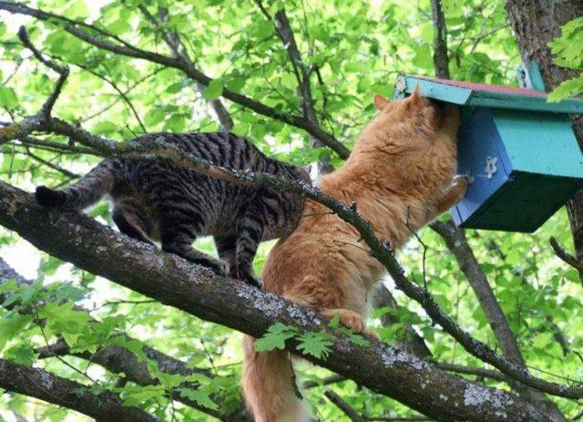 Кошки – злейшие враги птиц