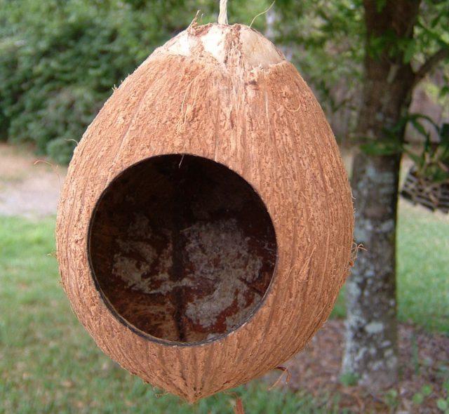 Птичий домик из кокоса