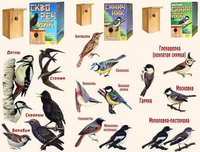 В каких скворечниках селятся разные виды птиц